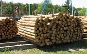 импорт леса с Украины